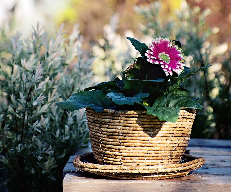 Planter Un Lilas En Pot services-conseils - cascabella